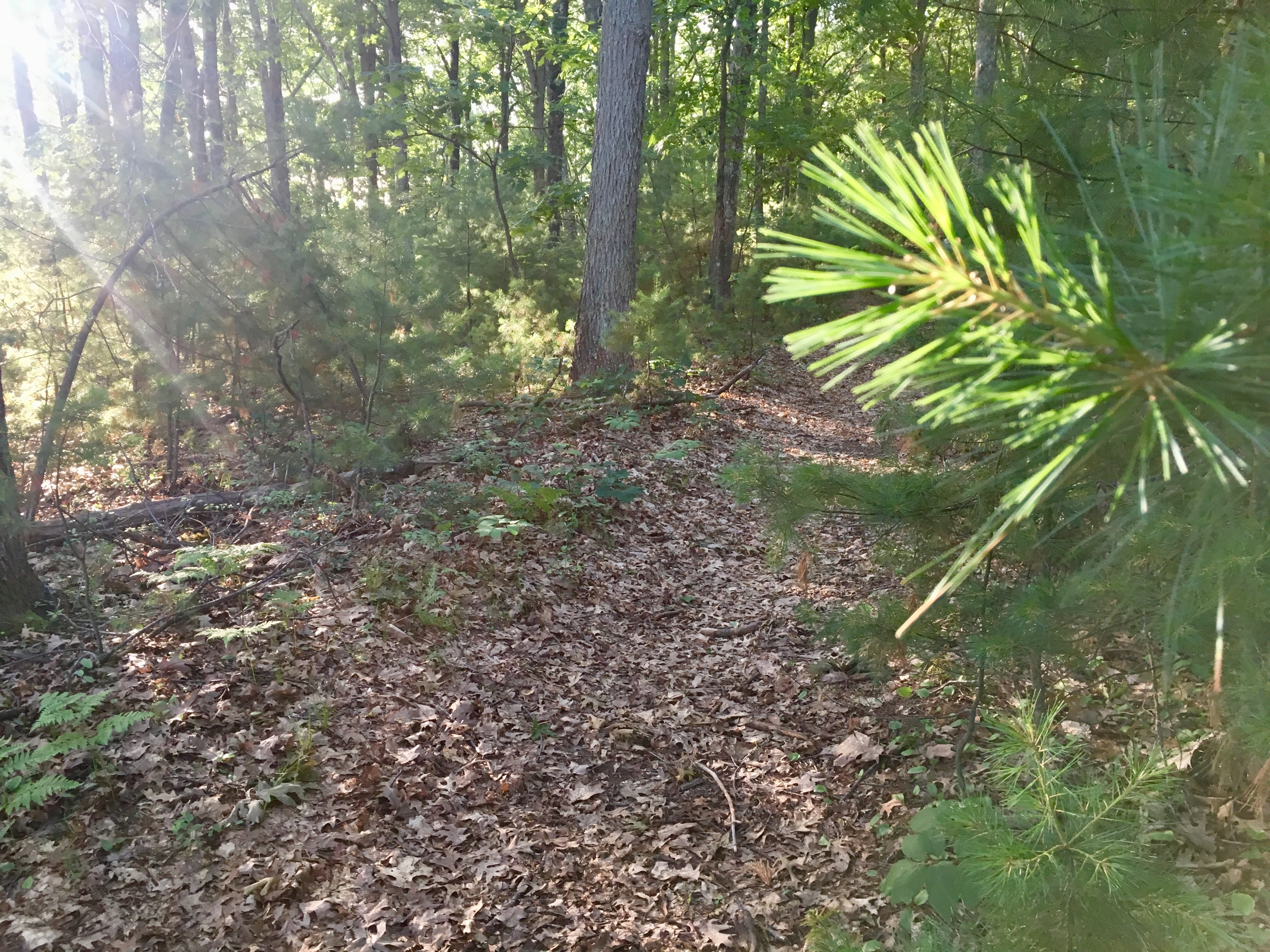 Listening to the leaves and pine needles under your feet can help calm your mind as you walk through the woods.